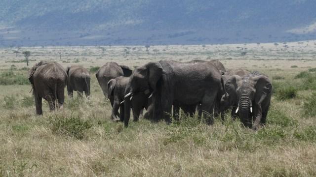 Visit Kenya and Tanzania and see elephants