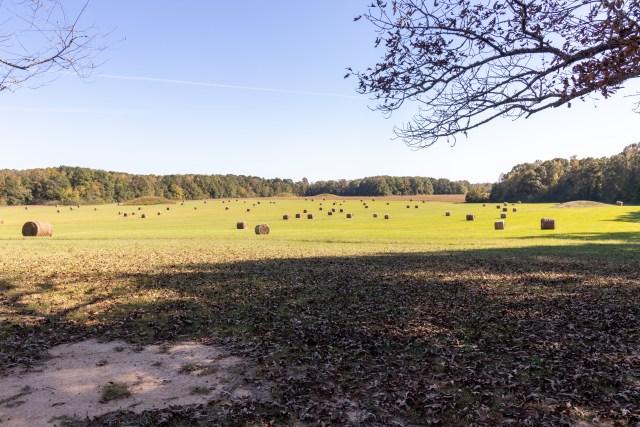 Pharr Mounds along the Natchez Trace Parkway