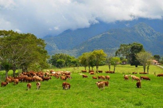 Padang Rumput di Padang Mangateh