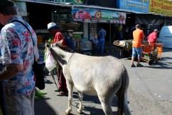 Fresh Donkey Milk in Santiago's Local Market