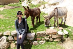 Hanging with Donkeys on Isla del Sol