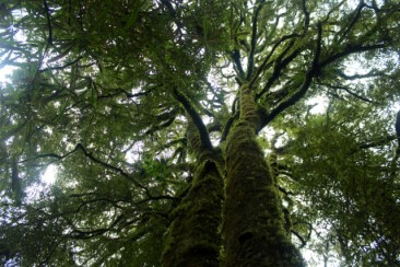 Forest Outside Waitomo Caves