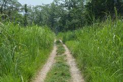 High Grassy Plains