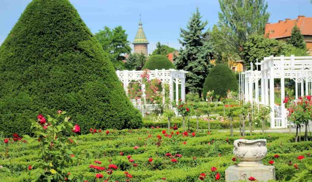 Roses Park in Timisoara, covered in lush greenery and red roses with white pergolas standing alone.