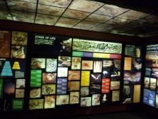 Cave Life Exhibit (Anniston)