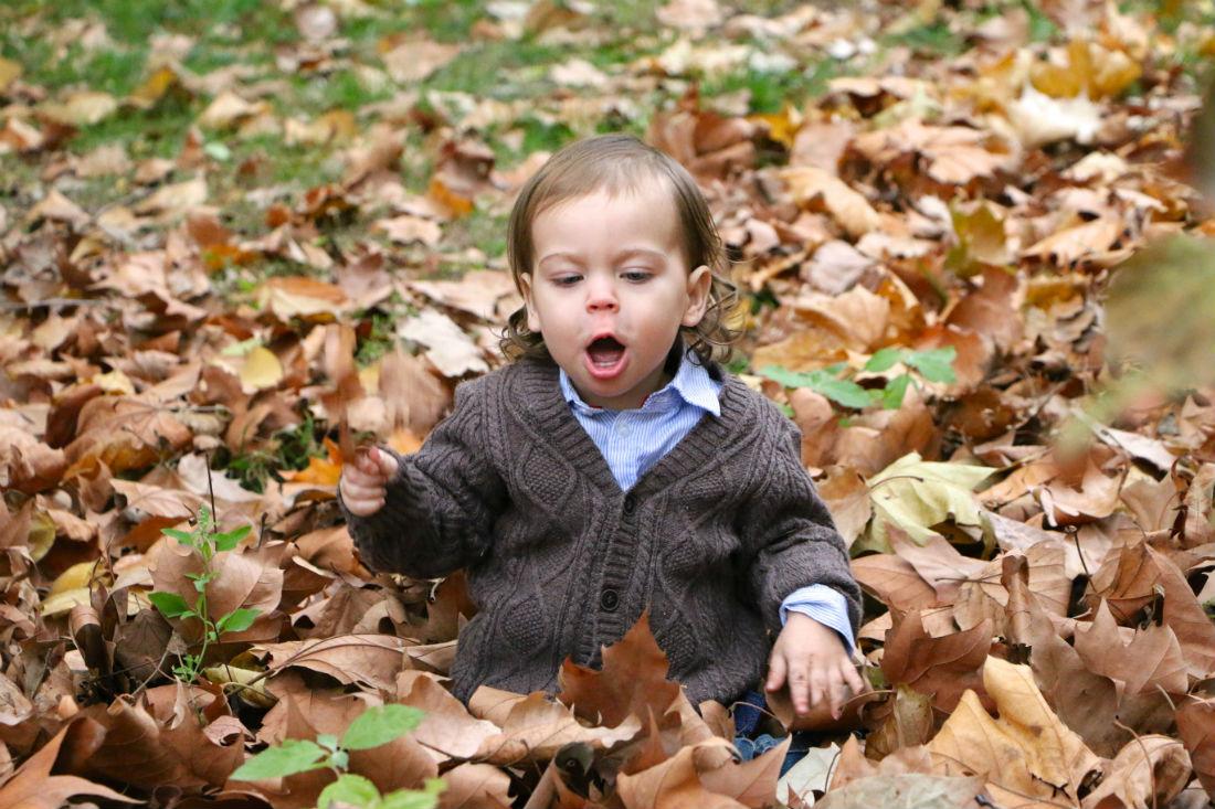 Leaf Play