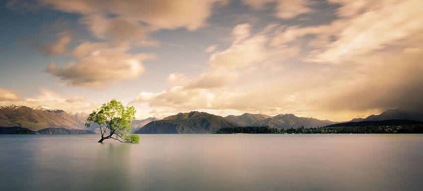 1200px-Lonely_tree_of_Wanaka
