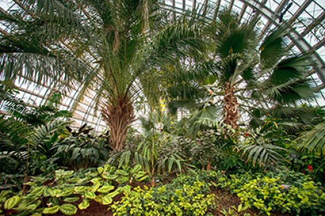 Garfield Park Conservatory Palm House-Toddlers playing at the Peggy Notebaert Nature Museum-things to do in Chicago indoors with kids