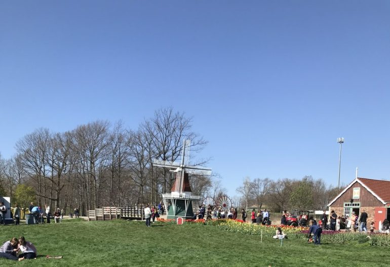 Tulip Time with Kids, Windmill Island Gardens