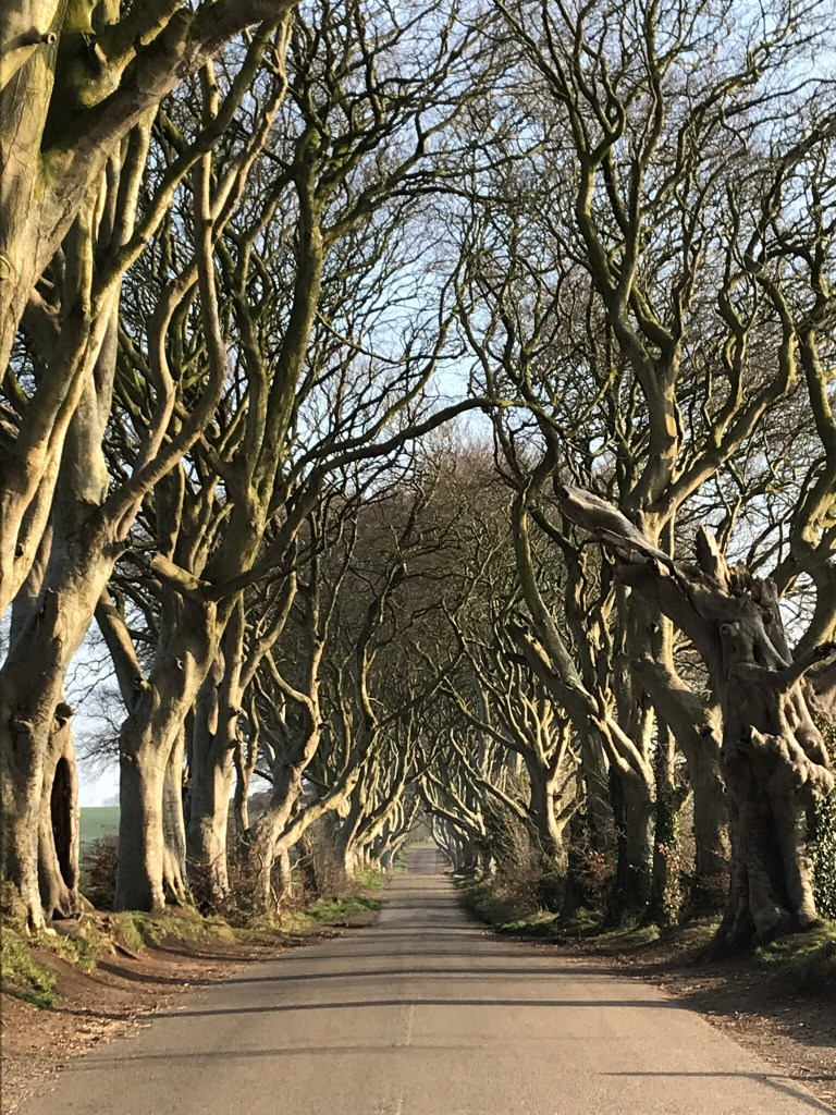 Dark Hedges Bregagh Rd.