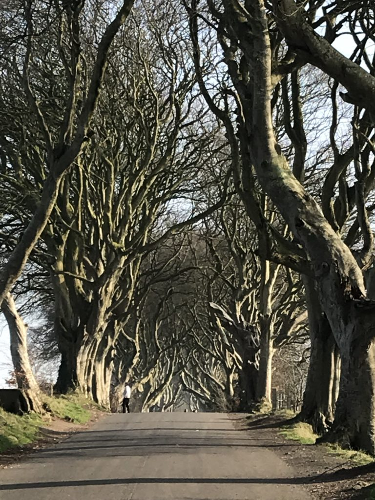 Dark Hedges along Bregagh Rd.