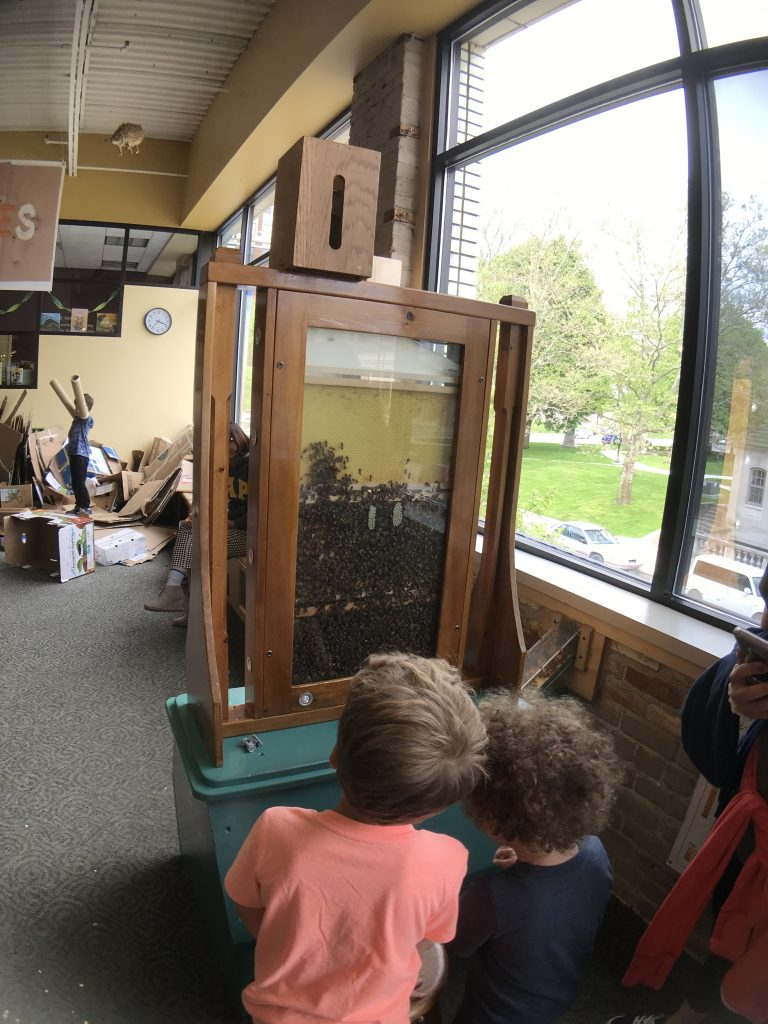 Children looking at a bee hive at the Grand Rapids Children's Museum