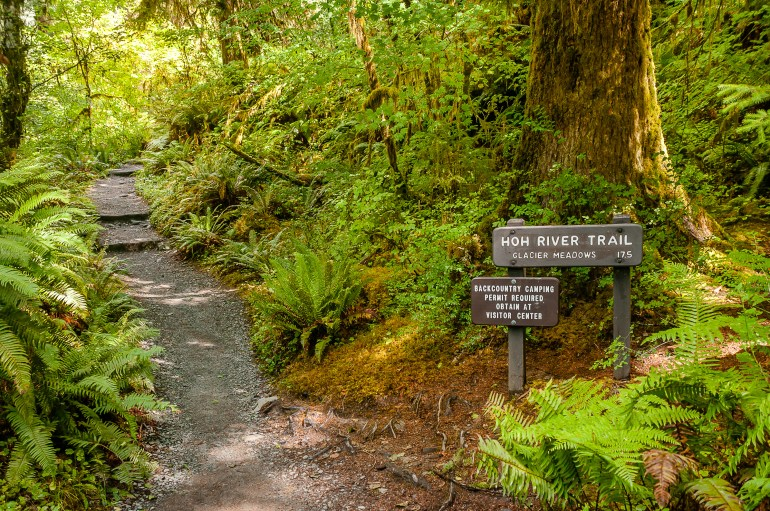 Hoh Rainforest trailhead post