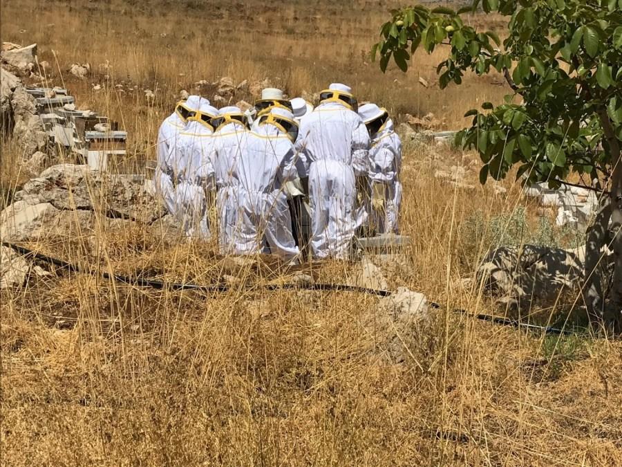 Atelier du Miel Beekeeping Workshop Tannourine (3)