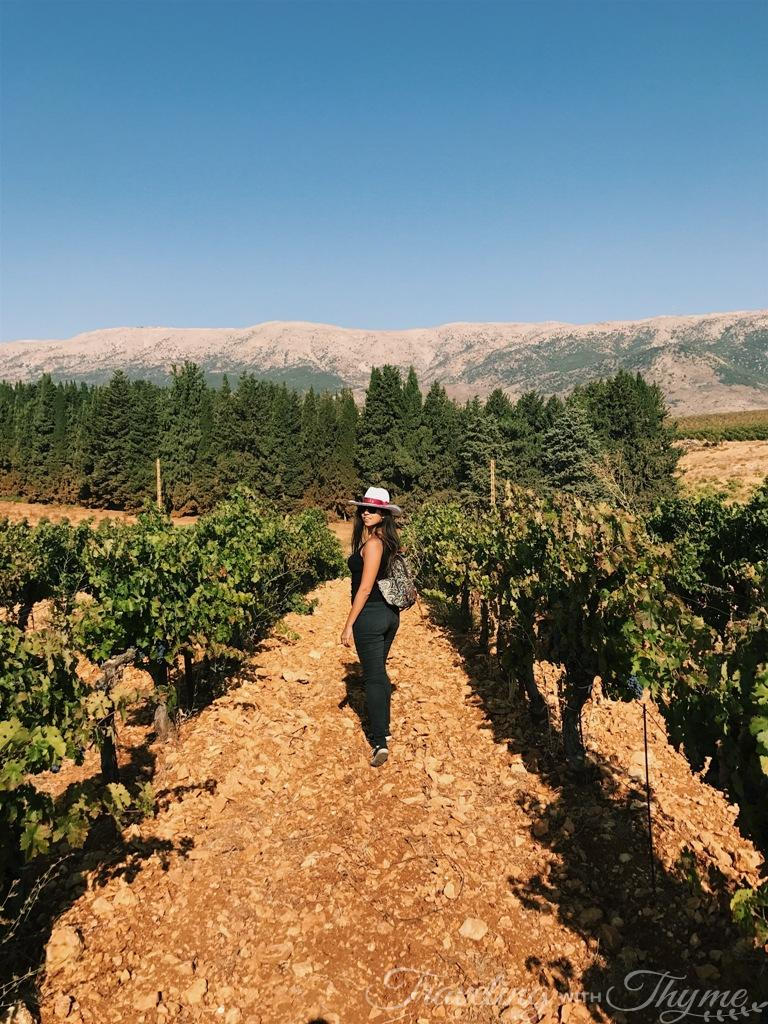 Traveling Vineyard Reviews