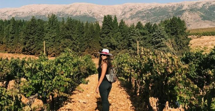 Chateau Ksara Vineyard Grape Harvest