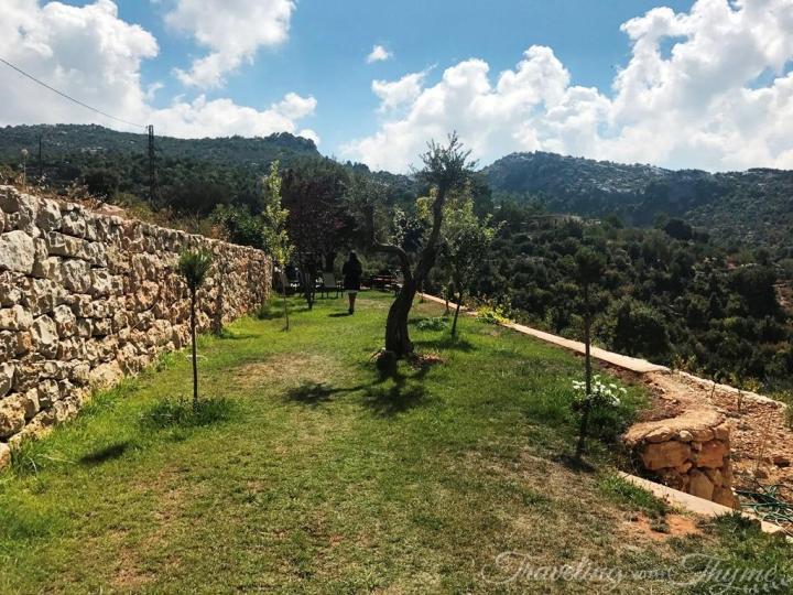 Lebanese Fruits Mountains Figs Organic Batroun