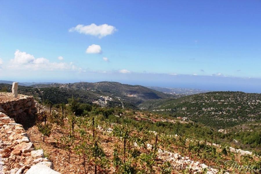 209 Lebanese Wine Batroun Nature Lebanon