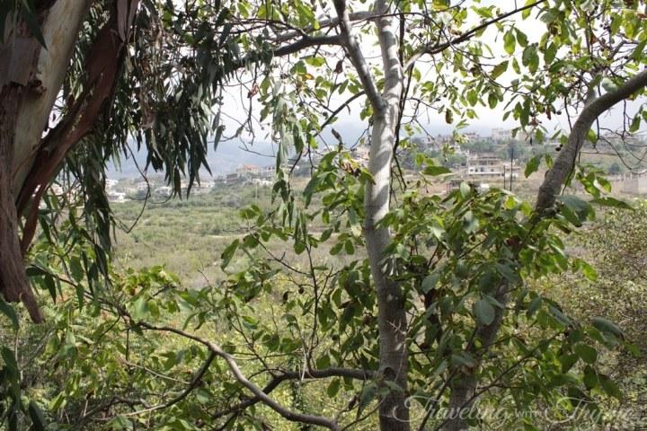 Baytna Barouk Cedars Restaurant Lunch View