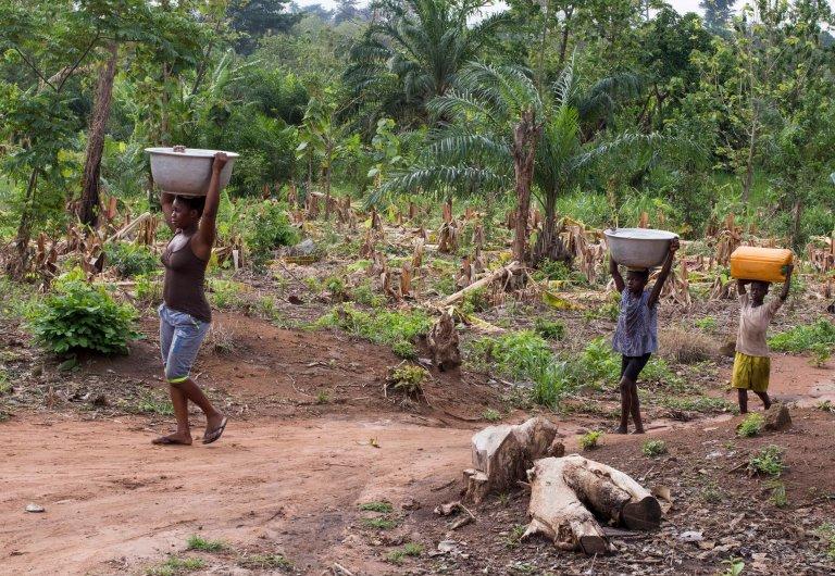 Ghana-Farms-0587