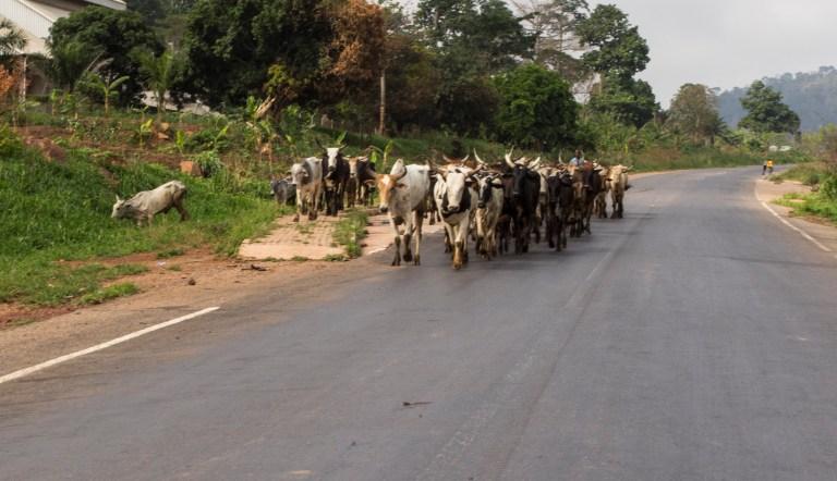 Ghana-Farms-0607