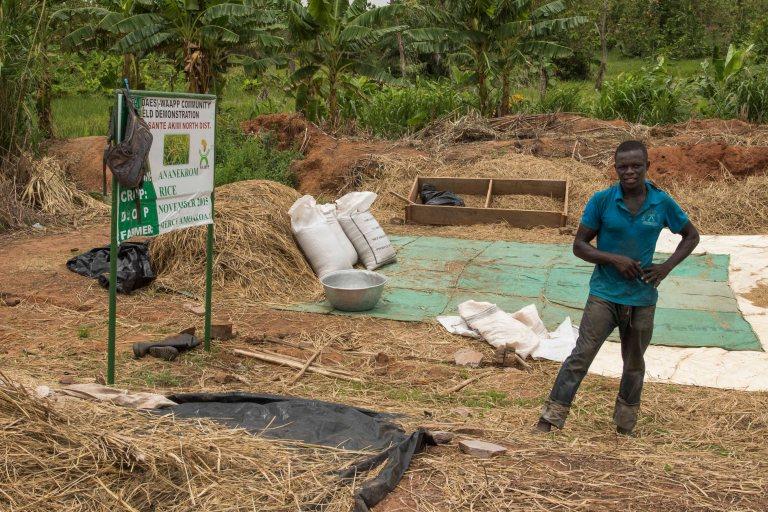 Ghana-Farms-0802