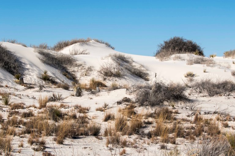 White Sands NM-2454