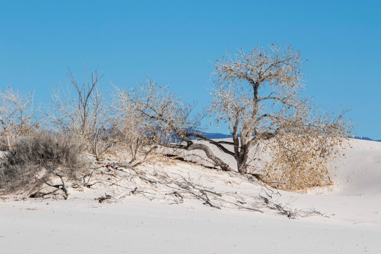White Sands NM-2458