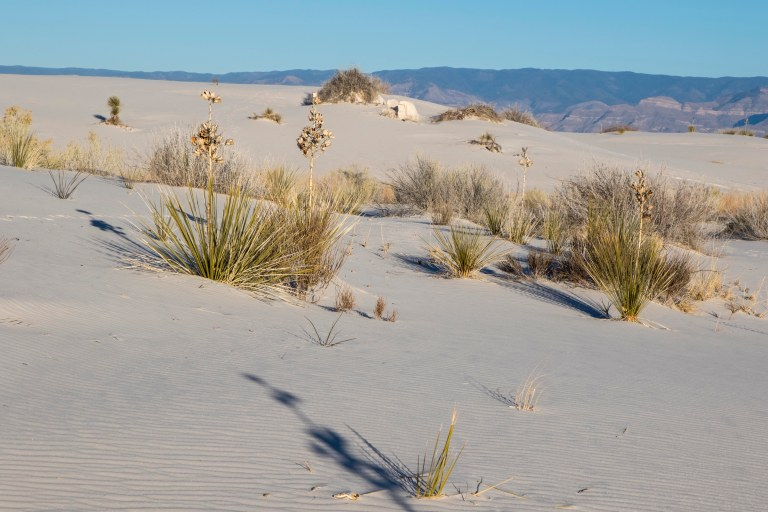 White Sands NM-5999