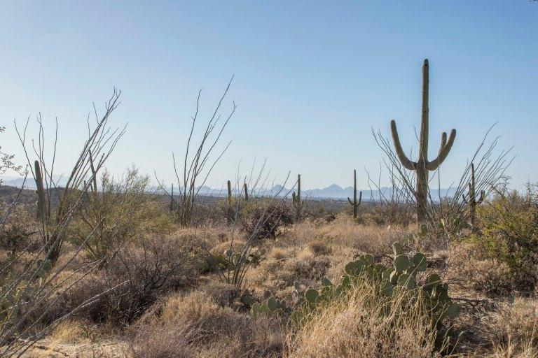 Saguaro NP-6363