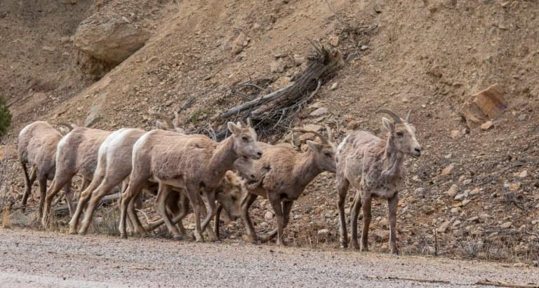 Around Taos Part 2-3575