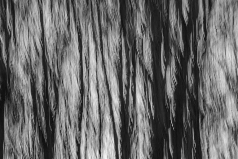 trees-0727