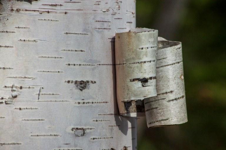 trees-3920