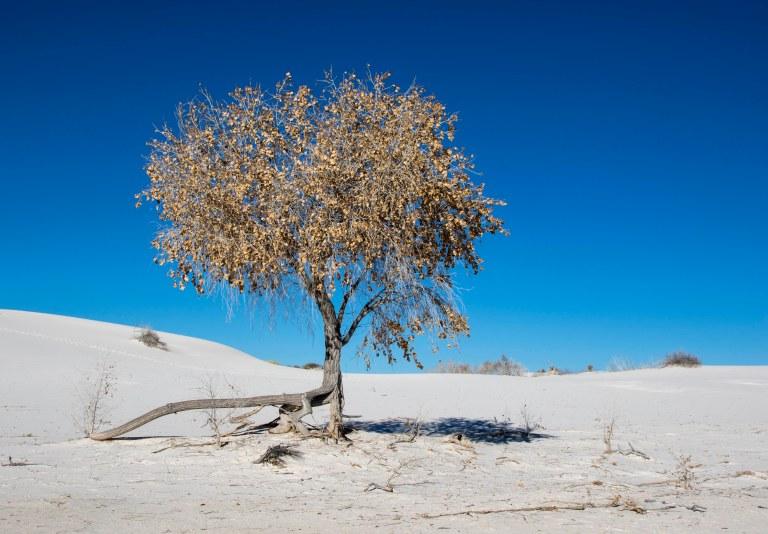 trees-5985