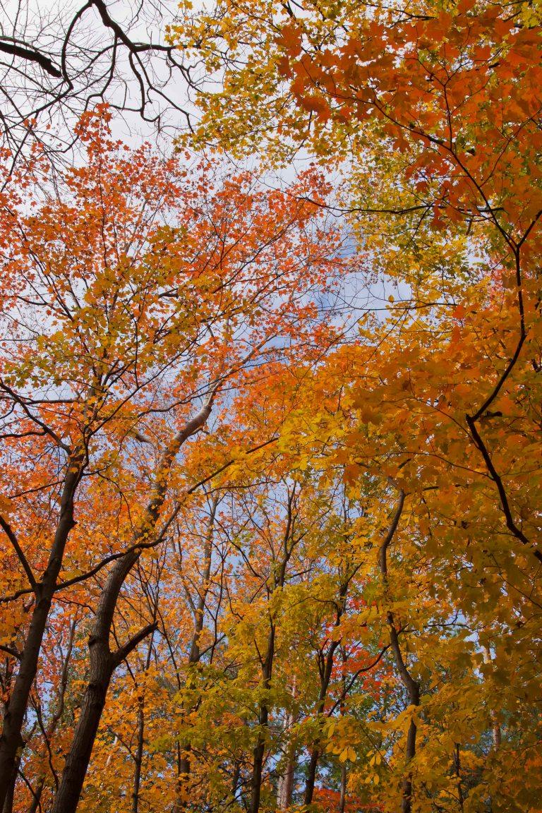 trees-7304