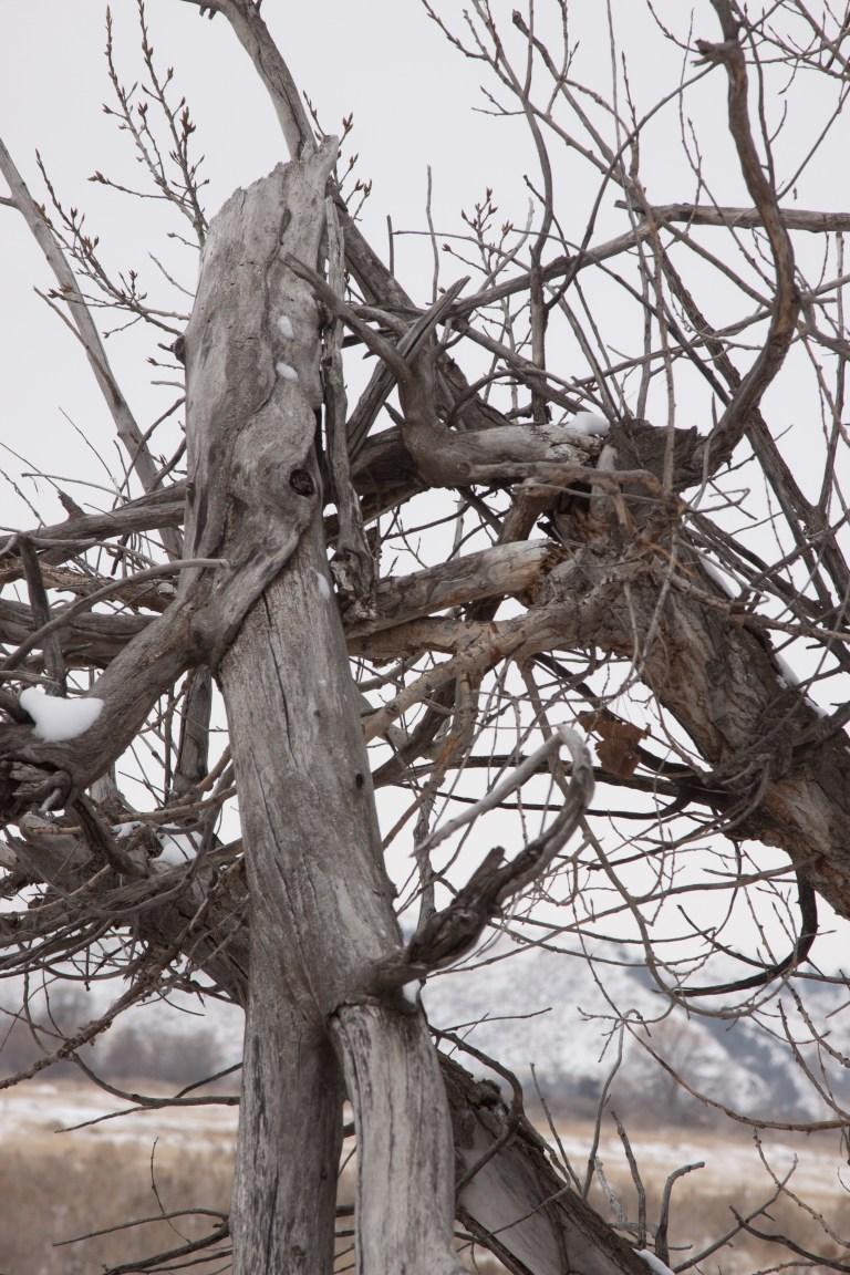 trees-8448