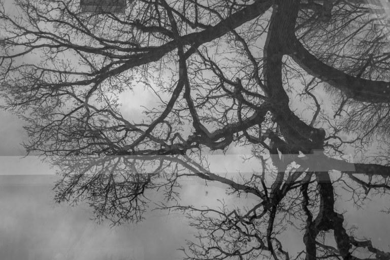 trees-8732