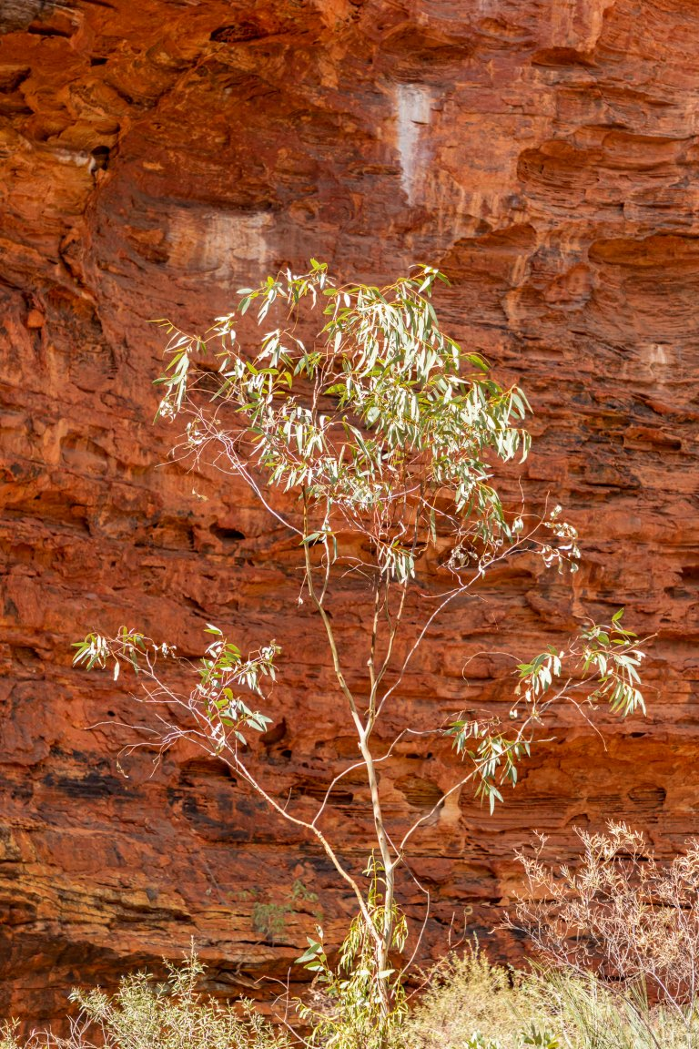 Kings Canyon-6098
