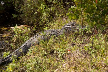 Everglades-6595