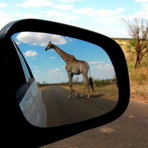 Safari at Kruger National Park, South Africa