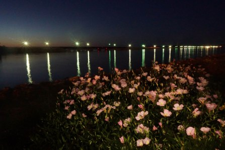 Night Flowers at the Rez