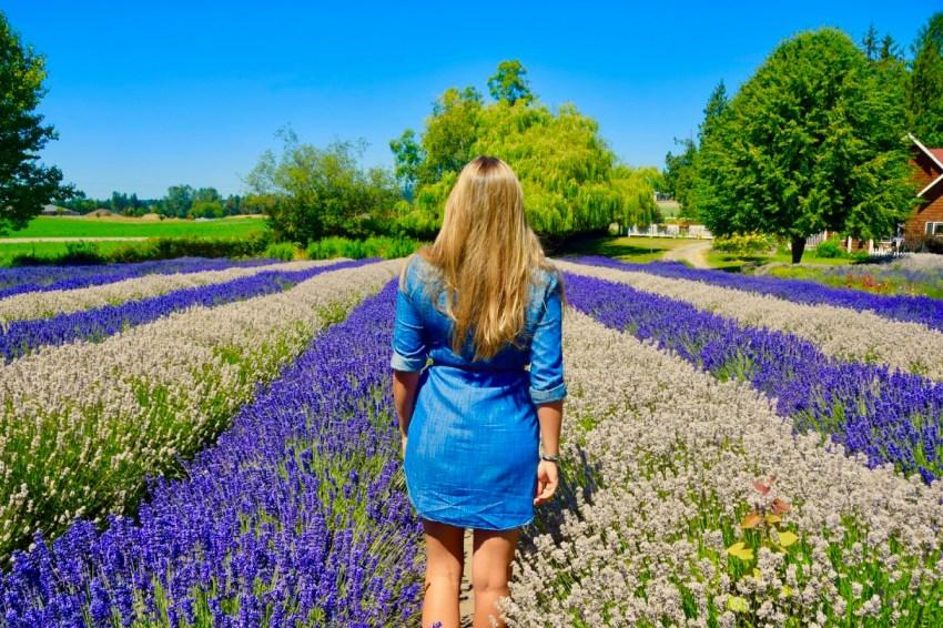 purple haze lavender farm