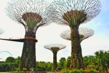 Towering SuperTrees.