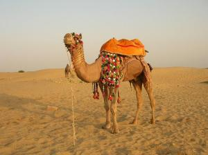 Sum_Sand_Dunes_jaisalmer1