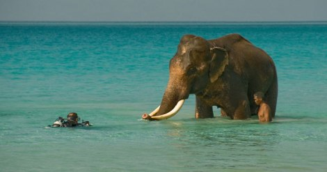 elephant-beach-andaman-4