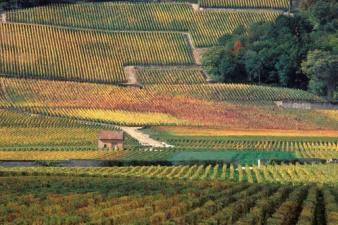 Photo: Mosaic of the Climats, Dijon France