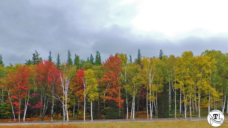 Treeline at Wildcat Mountain