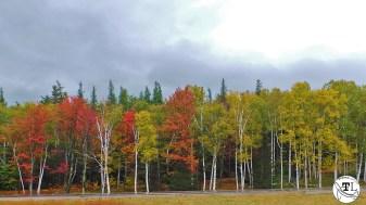 Treeline at Wildcat Mountain