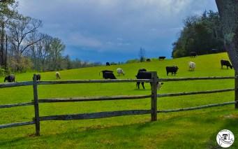 James Monroe's Highland via @TravelLatte.net