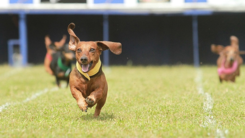 Spring Festivals in Texas - Buda Country Fair and Wiener Dog Race